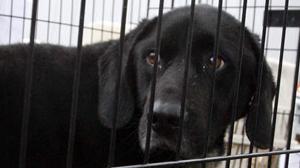 Okrutny właściciel schroniska dla psów